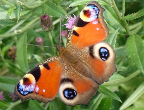 Vogel- en vlindertuin