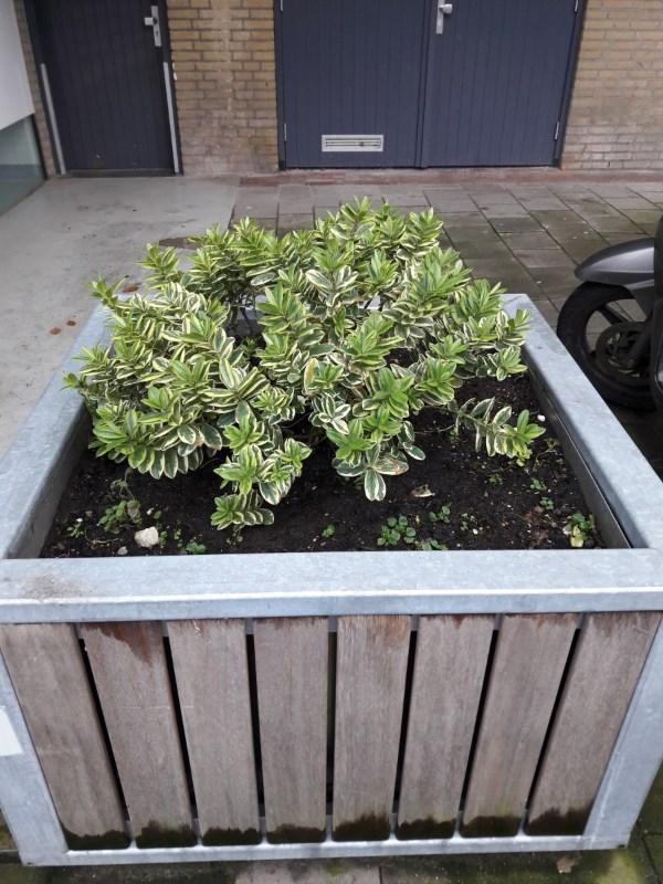 plantenbak-beukenhorst