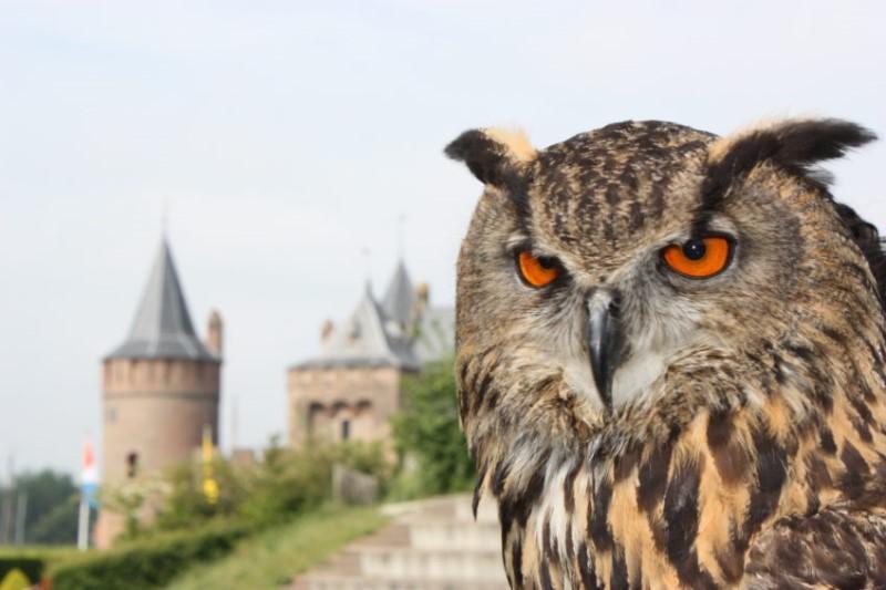 uil-met-kasteel