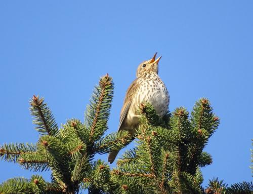 Elke vogel zingt zijn eigen lied