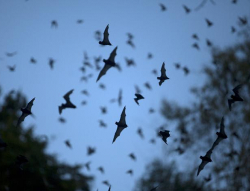 Vleermuis spotten in het Diemerbos